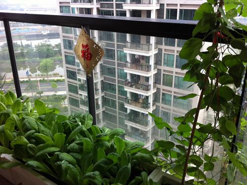 阳台打造方寸田园 阳台种菜DIY