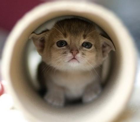 宠物篇 养猫注意事项