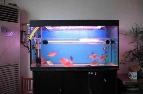餐厅鱼缸置于凶位